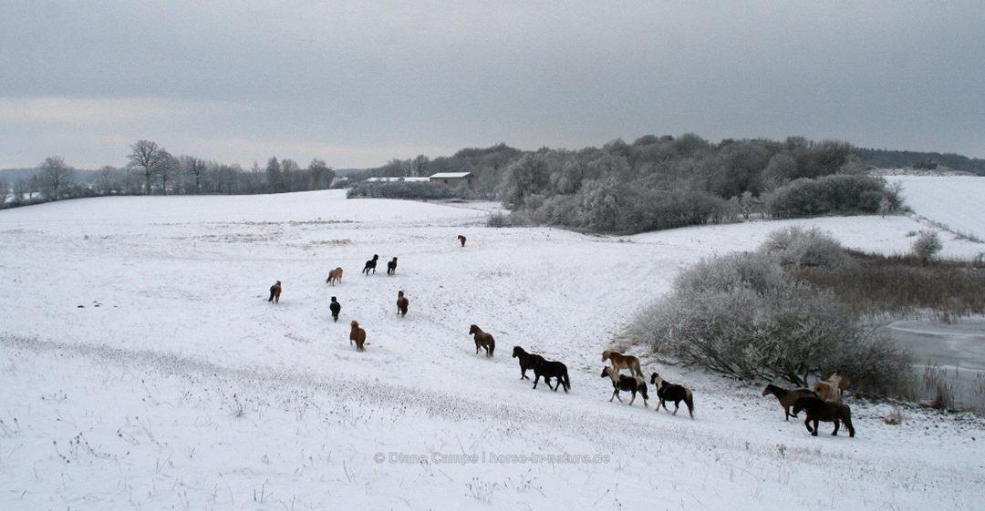 News Mit den Ponies durch den Winter