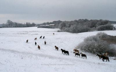 Mit den Ponies durch den Winter