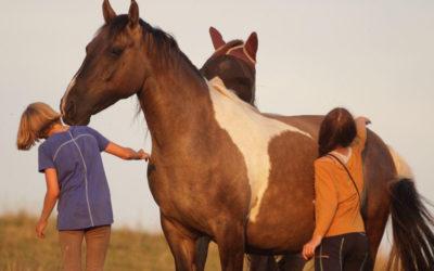 Für mehr Horse in Nature auch in 2021 – die Termine sind online